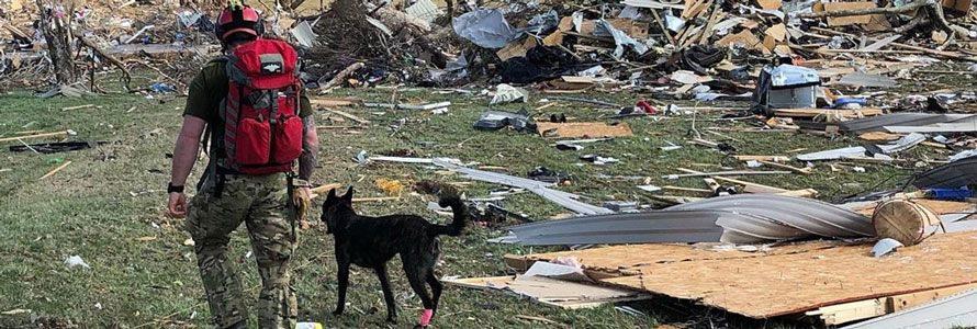 First responder with dog surveying tornado damage