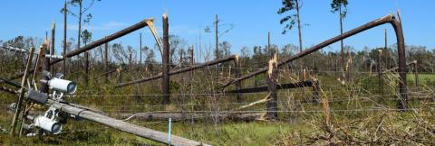 Toppled trees and telephone pole damage from a hurricane